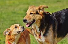 dogs-1615909_960_720