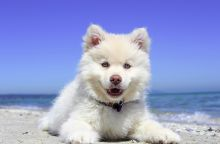 beach-1790049_1280