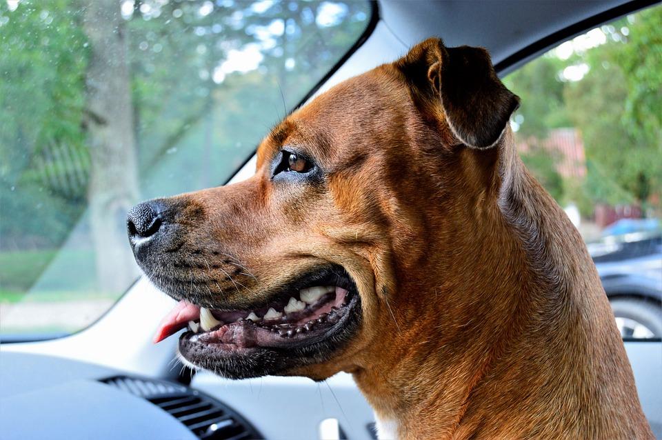 dog-2862594_960_720