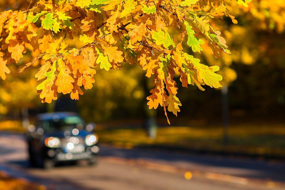 autumn-1804657_960_720